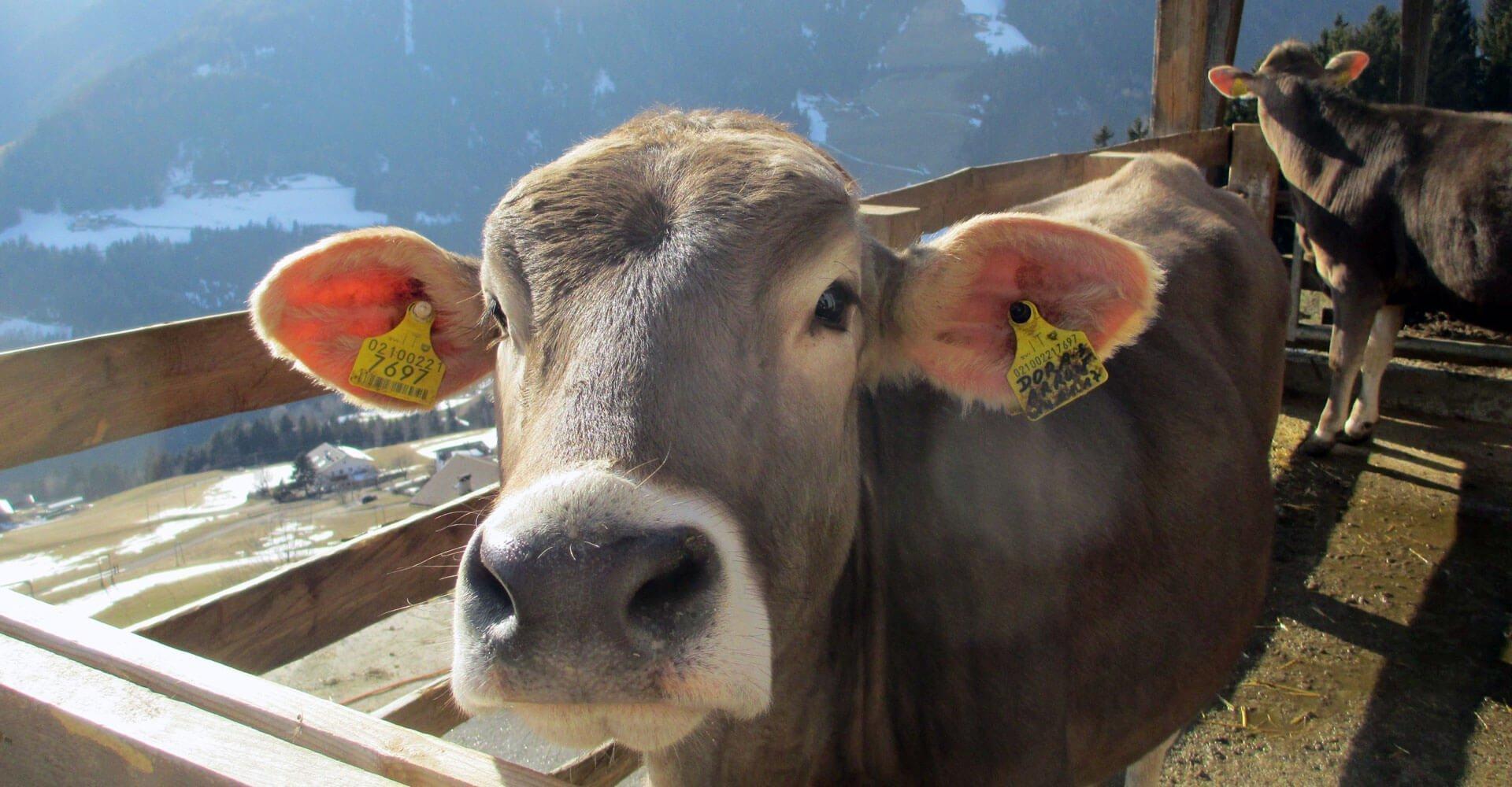 Kinderferien auf dem Bauernhof - Südtirol