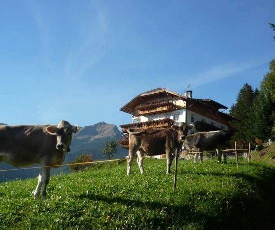 Vacanze in fattoria Chiusa